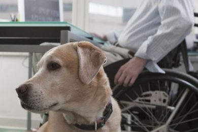 Service dog in the office with its owner